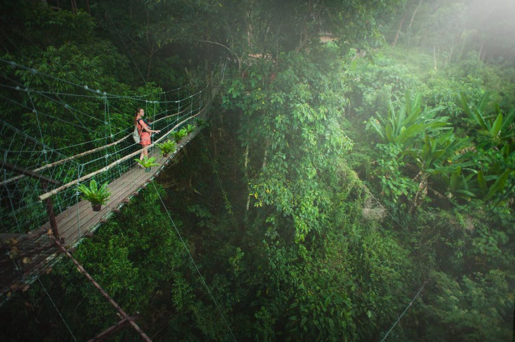 Amazon Rain Forrest